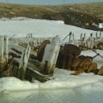 Norwegian group seeks Amundsen's ship from Canada