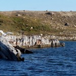 Norwegians win converts for removing the Maud from Nunavut
